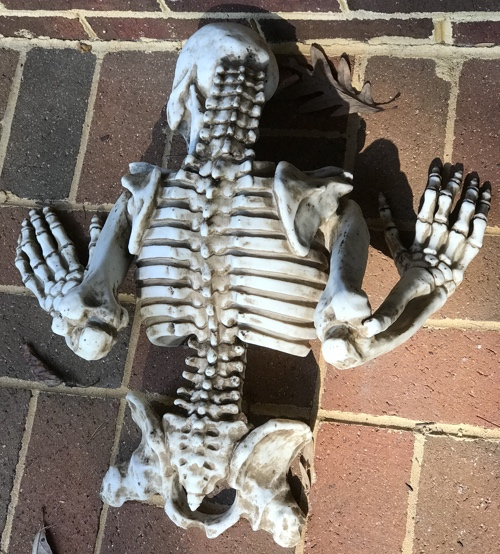 skeleton_back